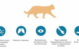 Аллергия на кошачью шерсть – причины и симптомы