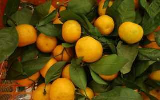 Симптомы, причины и профилактика аллергии на апельсины