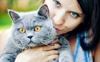 Аллергология: эпителий кошки