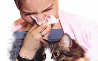 Есть ли аллергия на кота расшифровка анализа