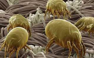 Хотите вылечить бытовую аллергию на домашнюю пыль? Вам поможет АЛТ!
