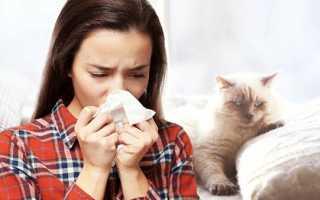 Аллергия на кошку проявилась спустя года