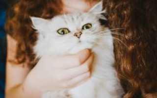 Аллергия на кошачий эпителий