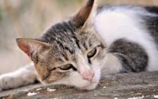 Аллергия у животных: диагностика, профилактика и лечение