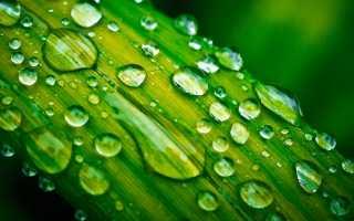 Как погода влияет на аллергены