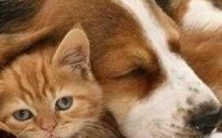 purina proplan liveclear и аллергия на кошек