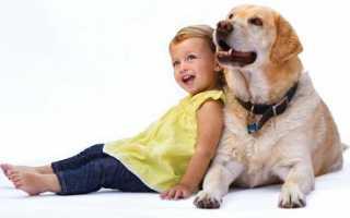 Как проверить есть ли у меня аллергия на собак?!