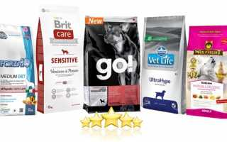 Топ-15 лечебных кормов для собак при заболевании ЖКТ