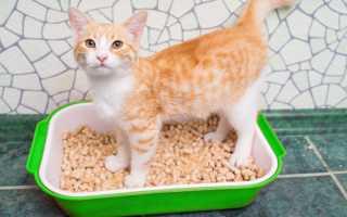 Аллергия у кошек на наполнитель