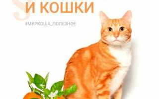 Можно ли аллергикам заводить кошку?