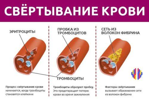 kakie-veshhestva-uchastvuyut-v-svertyvanii-krovi-2-500x333.jpg