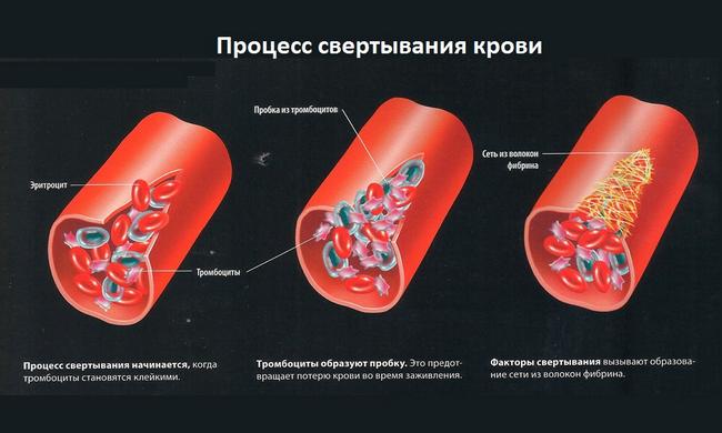 protsess-svertyvaniya-krovi3.png
