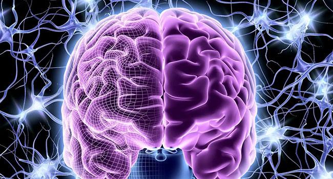 Golovnoj-mozg.jpg